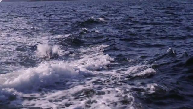 Dr. Joanne O'Brien - Acoustics Monitoring & Cetaceans